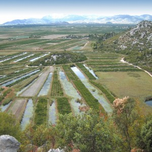 Cultivation in the Neretva, Th. Papayannis